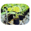 organic plant extract with seaweed extract alginic acid 16%