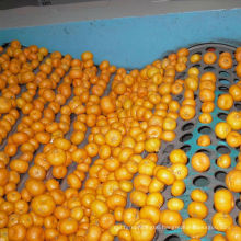 Fresh Good Qulality Baby Mandarin Orange