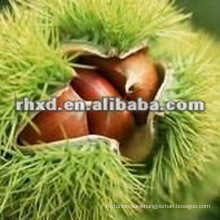 New crop chestnut price
