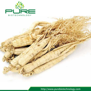 Atacado Natural Bulk Panax Ginseng root