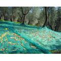 Специальные новые продукты оливковое растет плетения