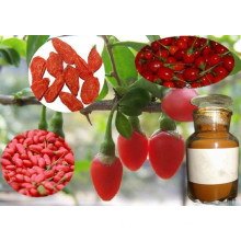 Goji Extract (Dried Goji Berry Extract)