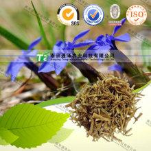 Чистый Натуральный Benth Китайского Лимонника Gentianae Радикса Calamintha