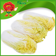 Fresh small Chinese baby cabbage(Small) four pack for sale
