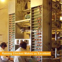 Machine automatique de collecte d'oeufs de poulet de couche de volaille