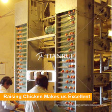 Máquina de coleta de ovos de galinha de camada automática de aves de capoeira
