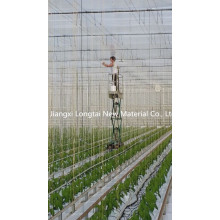 Greenhouse Tree Rope Hot Selling in Europe Market