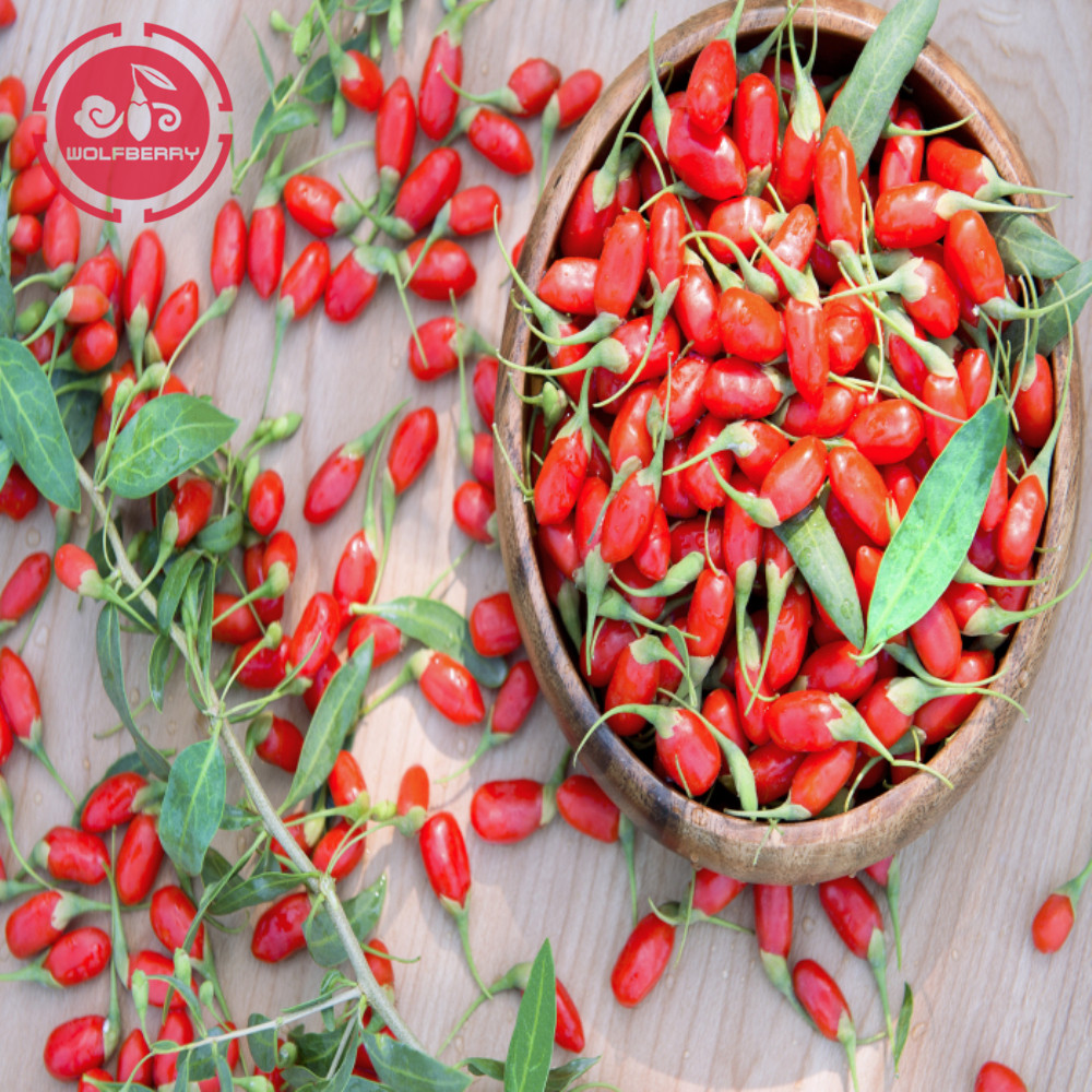 Tonic Herb Tastes Great Low pestisida Goji Berries