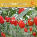 o tamanho de 0207 bagas de goji Semente frutuosa ningxia goji berry