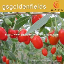 el tamaño de 0207 bayas de goji sembrado de fructosa bayas de goji