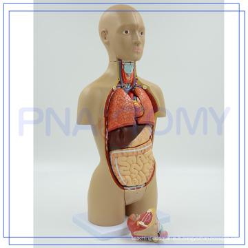 PNT-0322 haute qualité Anatomique corps humain images de pièces