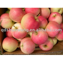 Clase A gala apple