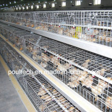 Poul Tech Pullet Chicken Cage (A Frame)