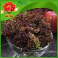 Frische rote Blattsalat besten Salat Salat