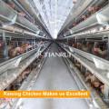 Jaula automática del pollo de colocación del huevo para el mercado de Bengala