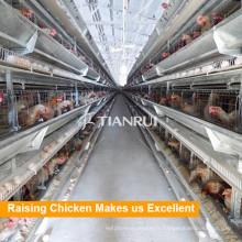 Tianrui H Type cage de poulet pour volaille