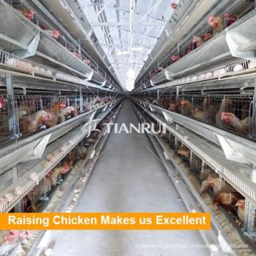 Gaiola automática da camada da galinha da exploração avícola de Indonésia