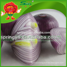 Organic cultivated red onion mesh bags