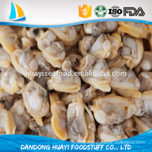 new season coming meat of baby clam/short necked clam