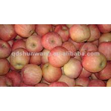Frische Gala Apfel