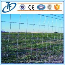 Profesional fabricante cerca de granja de alambre galvanizado barato para ganado / oveja