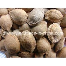 Sweet Almond in Shell