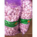Fresh White White Garlic 5cm