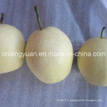 Fournisseur chinois professionnel de poire fraîche de Ya