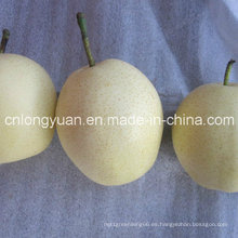 Proveedor chino profesional de Fresh Ya Pear