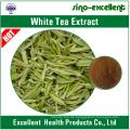 natürlicher weißer Tee-Extrakt