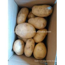Exportateur de pommes de terre pakistanaises marché de pommes de terre fraîches