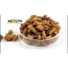 XinJiang Dried Bulk Grapes Sweet Golden Raisins Kismis