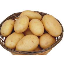 Les prix de la pomme de terre frais de haute qualité exportent le prix de la pomme de terre fraiche par tonne