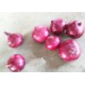 2016 Precio de mercado de la cebolla roja fresca a la venta