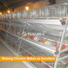 Chicken Farm Equipment with Hot Galvanized Baby Layer Chicken