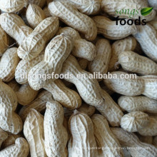 Companies looking for distributors of the peanut in sehll