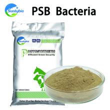 Alimentar bacterias fotosintéticas para aves de corral y ganado Aditivos para piensos