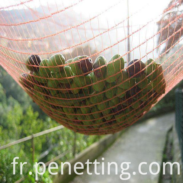 olive net 3