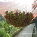 Rede de Agricultura Plástica para Azeitona