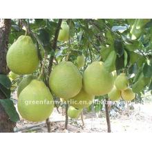 Calidad superior 2011 pera fresca de Ya en Greenfarm