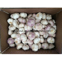 Chinese New Cold Normal White Garlic 5.0cm & up