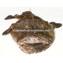 Haupt-Meeresfrüchte-Produkte gefrorene Seeteufel roh frisches Material