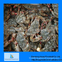 New high quality frozen mud crab