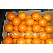 Las naranjas Navel enumeran las frutas amarillas