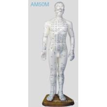 Modelo humano de la acupuntura (AM50M)
