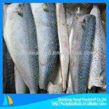 frozen whole cleaned mackerel fillet
