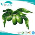 Extrait de feuille d'olive 20% d'oléuropeine dans le stock américain avec livraison rapide