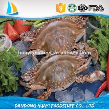 Crabe de natation à bas prix nouvel atterissage congelé bleu frais natation crabe