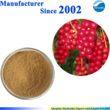 ISO-zertifiziertes Pflanzenpulver 100% natürlicher Schisandra-Beerenextrakt