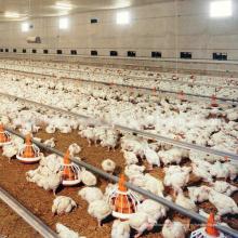 Équipements de volaille complet Set automatique haute qualité pour poulets de chair